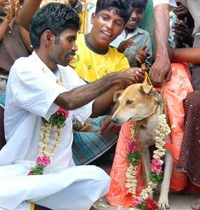 indianness,Man-Dog Marriage, animal human marriages in india