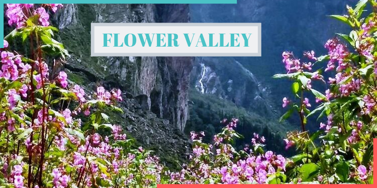 flowe valley in india,flower valley,india,indianness